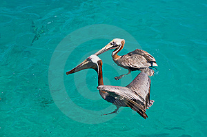 Two Floating Pelican Stock Photography - Image: 8062552