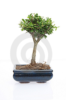 Tree Of Zen Stock Image - Image: 8064511