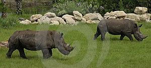 Rhinoceros Stock Photo - Image: 8065440