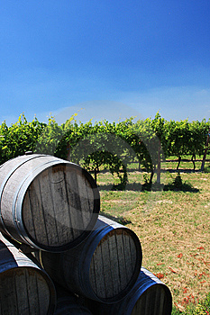 Barrels Of Wine Royalty Free Stock Photos - Image: 8066738