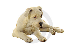 Sad Puppy Royalty Free Stock Photo - Image: 8072275