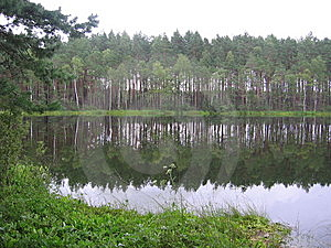 Small Lake In Wood Royalty Free Stock Images - Image: 8075969