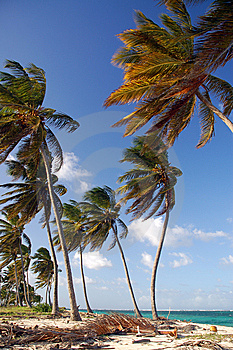 Palms On The Beach Royalty Free Stock Photos - Image: 8083048