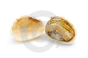 Pistachio Nut Stock Photos - Image: 8089263