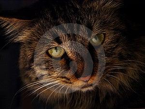Cat Stock Image - Image: 8090641
