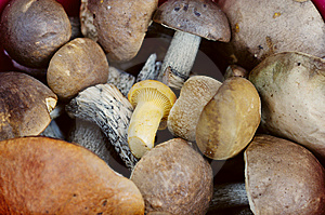 Close-up Of A Bunch Of Raw Fresh Eatable Mushrooms Royalty Free Stock Photo - Image: 8091795