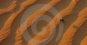 Run Beetle Royalty Free Stock Photos - Image: 816388