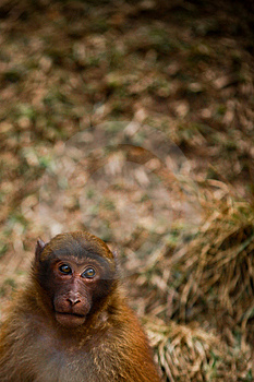 Monkey With Hope Stock Photography - Image: 8110362