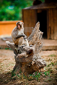 Monkey With Hope Royalty Free Stock Photos - Image: 8110548
