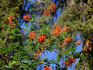 Sevilla Alcazar Garden Stock Photo - Image: 8113430