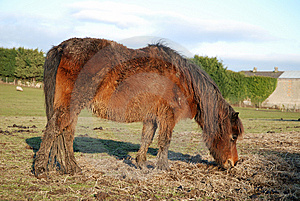 Neglected Pony Stock Image - Image: 8113551