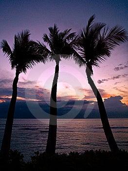 Tropical Sunset Royalty Free Stock Photo - Image: 8116305