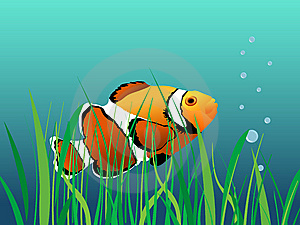Clown Fish Royalty Free Stock Images - Image: 8121589
