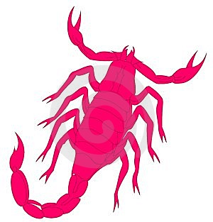 Scorpion Stock Photography - Image: 8123922