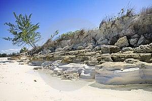 Tropical Beach Vegetation Stock Photo - Image: 8125820