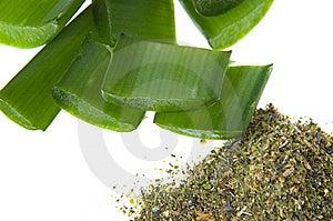 Aloe Vera - Alternative Therapy Royalty Free Stock Photo - Image: 8128125