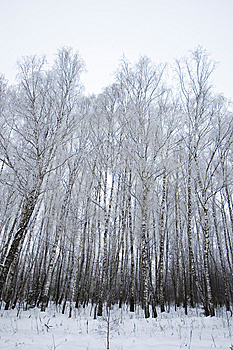 Frozen Trees Royalty Free Stock Images - Image: 8140219