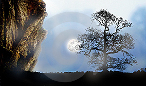 Lonely Tree Landscape Royalty Free Stock Image - Image: 8144806