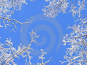 Snowy Treetops Stock Photo - Image: 8161840
