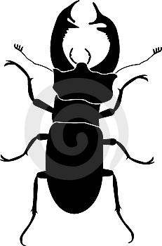 Stag Beetle Stock Image - Image: 8165191