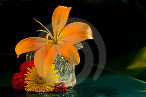Day Lilly In Miniature Pitcher Royalty Free Stock Photography - Image: 8166717