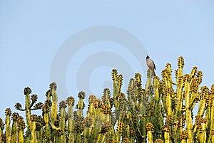 Cactus Stock Photography - Image: 8169082