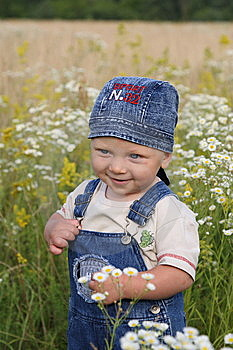The Kid And Camomiles Stock Photography - Image: 8169472