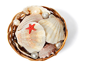 Basket With Sea Shells Stock Photo - Image: 8171000