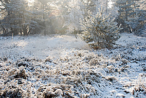 Nature And Snow Stock Photography - Image: 8174582