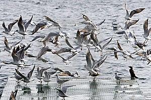 Gulls Flying Stock Images - Image: 8175034
