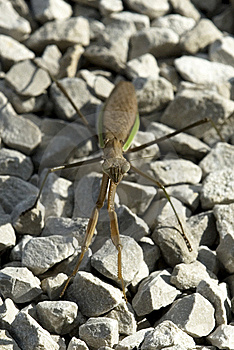 Pray Mantis Insect Stock Photo - Image: 8181440