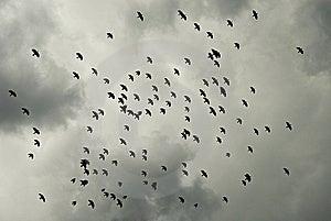 Birds Flying Royalty Free Stock Image - Image: 8189286