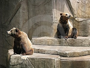The Bears Stock Photos - Image: 8191163
