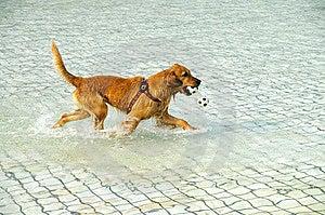 Dog Game Royalty Free Stock Photo - Image: 8191465