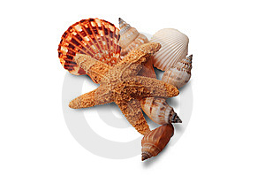 Sea Shell Group Stock Photos - Image: 8199493