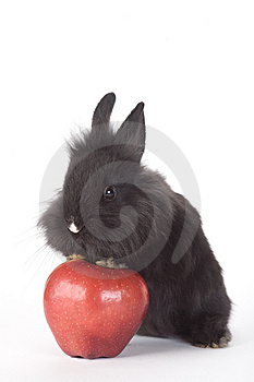 Black Bunny And An Red Apple, Isolated Royalty Free Stock Photography - Image: 8199807