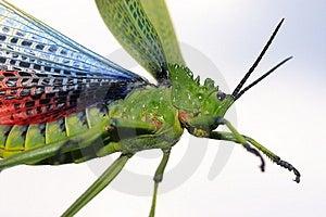 Beware Of The Bug Stock Photo - Image: 820920