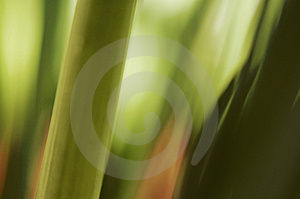 Stalks Royalty Free Stock Photo - Image: 823615