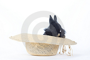 Black Bunny In The Straw Hat, Isolated Royalty Free Stock Images - Image: 8200009