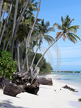 Seaside - Palms And Hammock Royalty Free Stock Photography - Image: 8201577