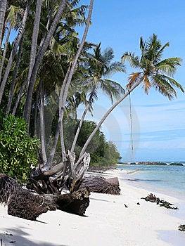 Seaside - Palms And Hammock Royalty Free Stock Photography - Image: 8201577
