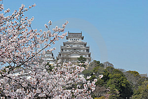 Cherry Blossoms At Himeji Castle Royalty Free Stock Photo - Image: 8210415