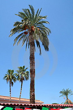 Palms Stock Photography - Image: 8216982