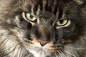 Cat Snout Stock Images - Image: 8217794