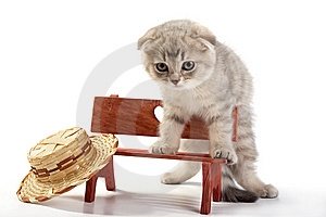 Cat Sits On A Bench Stock Images - Image: 8223814
