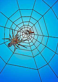 The Spider Succeed In Catching Food Royalty Free Stock Photo - Image: 8229325