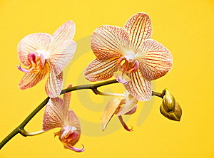 Orchid Composition Stock Image - Image: 8231531