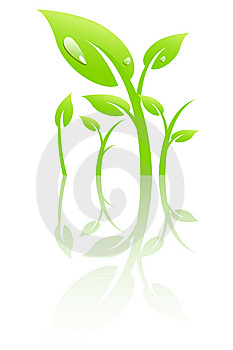 Plant With Dew Royalty Free Stock Photos - Image: 8234028