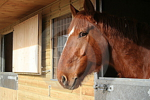 Horse In A Stable Royalty Free Stock Photos - Image: 8236898