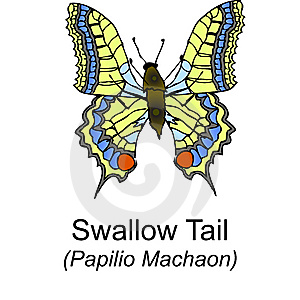 Swallow Tail Butterfy Stock Photo - Image: 8243700